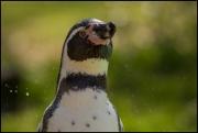20150409_Tierpark_Pinguin.jpg