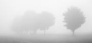 Nebelung.jpg